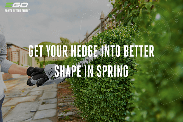Get your hedge into better shape in spring